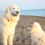 al mare con nana cucciola