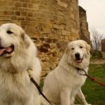 Olmo e fajolle al Castello del Conte di Foix