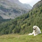Wesna del Musinè detta Pietra sui Pirenei