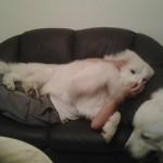 Niente male il nostro divano, mamma!
