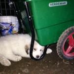 piccolo agricoltore